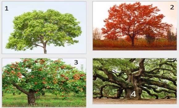 Melyik fa tetszik a legjobban? Személyiséged rejtett vonásaira derülhet fény