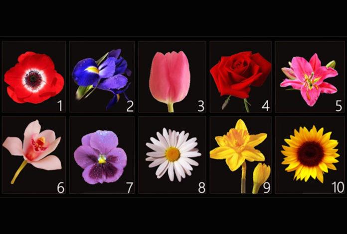 Válassz egy virágot és ismerd meg a személyiséged legkülönlegesebb vonásait!