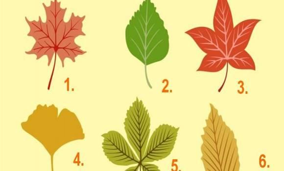 Válassz ki egy őszi falevelet, és olyan dolgokra derülhet fény, amiről eddig nem is tudtál!